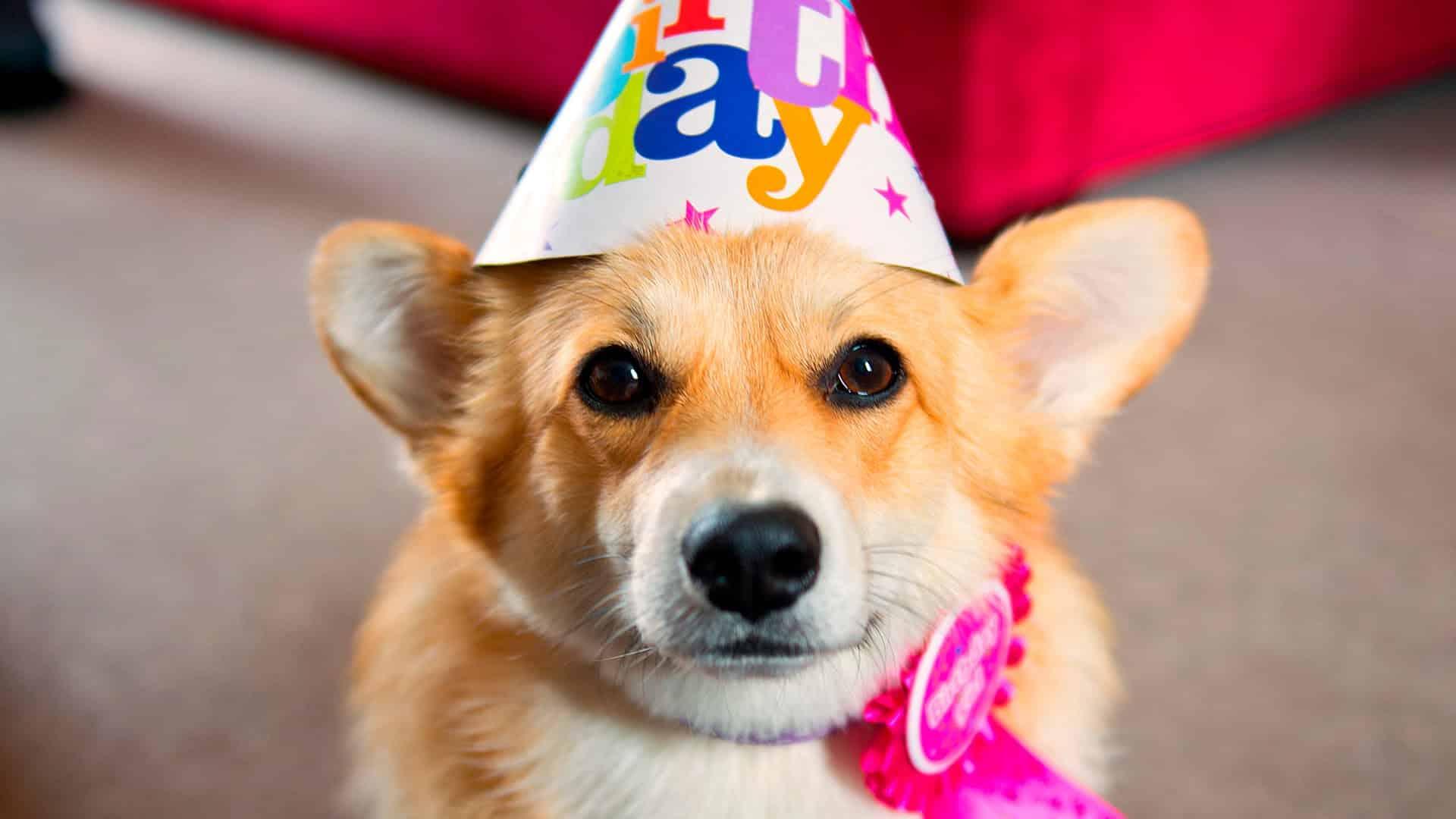 Смешные картинки с животными на день рождения, строителей веселые